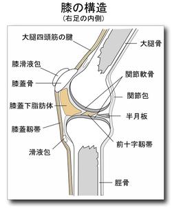 膝関節症.PNG
